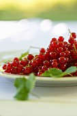 A plate of redcurrants on a table in the garden