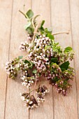 A bunch of flowering oregano on a wooden surface