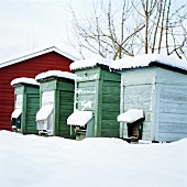 Beehives Covered by Snow.