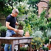 Man repotting thyme in garden
