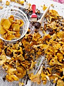 High angle view of chanterelles on table