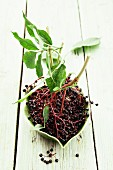A bunch of elderberries with stack and leaves, in a bowl