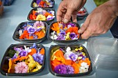 Worker preparing and packing edible flowers