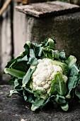 Cauliflower on a stone surface