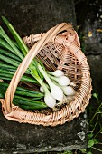 Spring onions in a basket