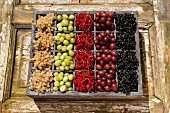 Assorted berries in an old wooden crate on a wooden surface (currants, gooseberries)