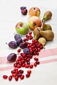 Wildobst, in der Natur gesammelt, auf Tischtuch: Pflaumen, Äpfel, Kornelkirschen, Birnen