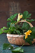 Basket with different leaves from garden
