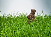 Chocolate bunny hiding in grass