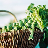 Brussels sprouts on the stalk in a willow basket