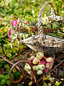 Apples and flowers in baskets on metal garden table