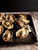 Grilled oysters on a baking tray