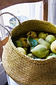 Quinces in a basket on a wooden chair