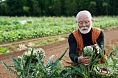 Alter Mann mit weißem Bart in einem Artischockenfeld