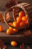 Stillleben mit Kumquats im Korb und Herbstblättern