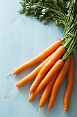 Fresh carrots on a pale blue surface
