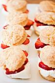 Strawberry Shortcakes in zwei Reihen