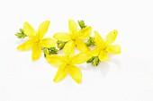 Fresh St John's wort flowers