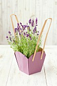 Flowering lavender in a purple paper flowerpot