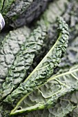 Organic Tuscan Kale at a Farmers Market