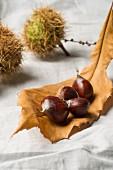 Sweet chestnuts on an autumnal chestnut leaf
