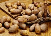 Frische Kartoffeln der Sorte Golden Wonder im Korb und auf Schneidebrett