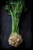 A fresh celeriac root