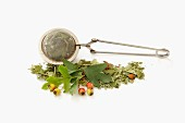 Hawthorn leaves, fresh and dried, with a tea strainer