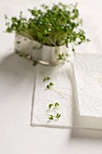 Fresh cress in a metal container, kitchen paper