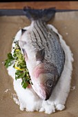 Preparing to Salt Roast a Whole Fish with Lemon and Herbs