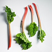 Four stalks of rhubarb with leaves