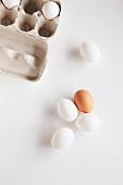Egg Carton and Fresh Eggs