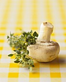A mushroom with thyme
