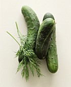 Fresh pickling cucumbers with sprigs of dill