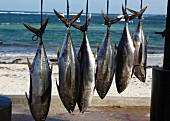 Fresh caught ahi tuna hanging up on the beach