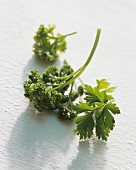 Flat leaf and curly parsley