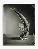 Mackerel in a water glass