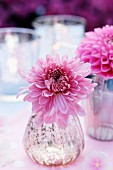 Pink dahlias to decorate a garden table