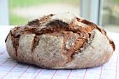 Whole wheat-rye bread