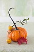 A Pumpkin Stiil Life