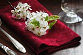 White apple blossoms on red napkin