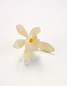 A vanilla flower against a white background