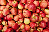 Red-cheeked apples