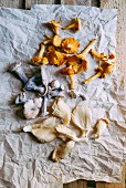 A variety of mushrooms on a crumpled sheet of paper
