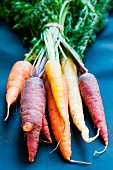 A bunch of carrots in various colours
