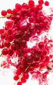 Redcurrants on ice