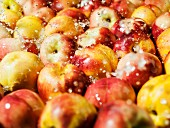 Nectarines in water
