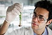 Laborant mit Pflänzchen in einem Laborglas