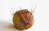 Eine ganze Kokosnuss
