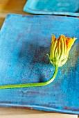Zucchiniblüte auf blauem Teller